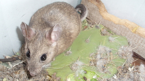 Rats and Mice: The Damage You Don't Know About